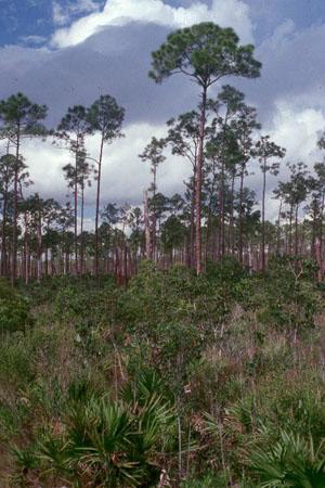 South Florida Terrestrial Ecosystems Lab Softel